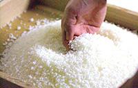 Niigata rice: source of daiginjo sake