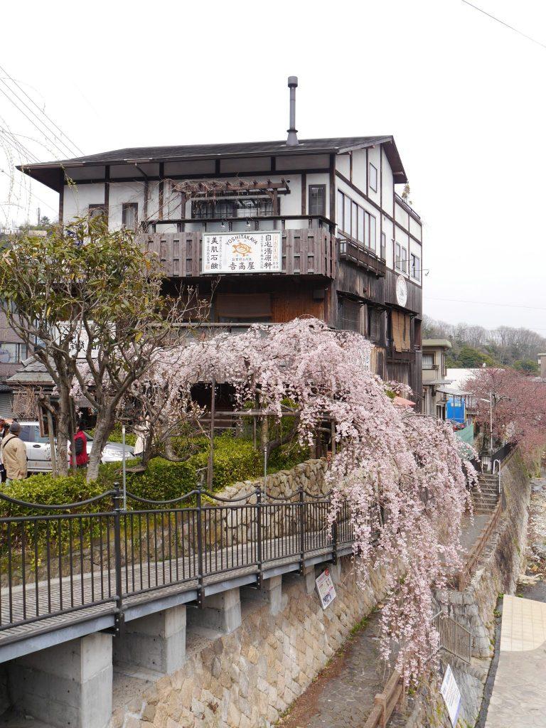 Cherry blossom in Arima Onsen