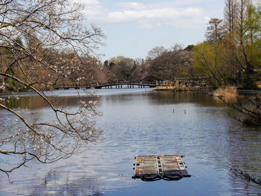 Inokashira Pond