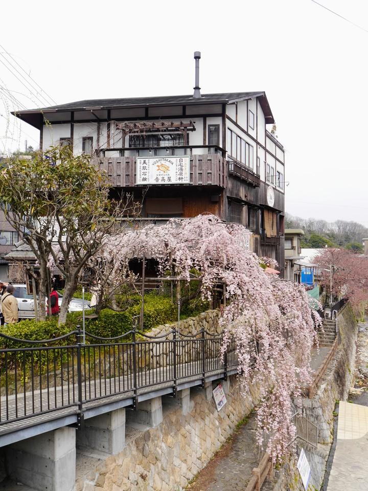 Sakura in Arima Onsen