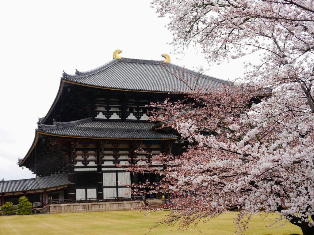 Todai-ji, Nara, Sakura Blossom