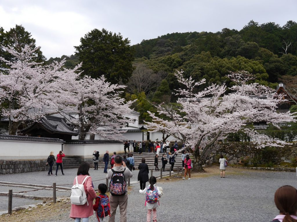 Sakura blooming in Nanzen-ji, Kyoto