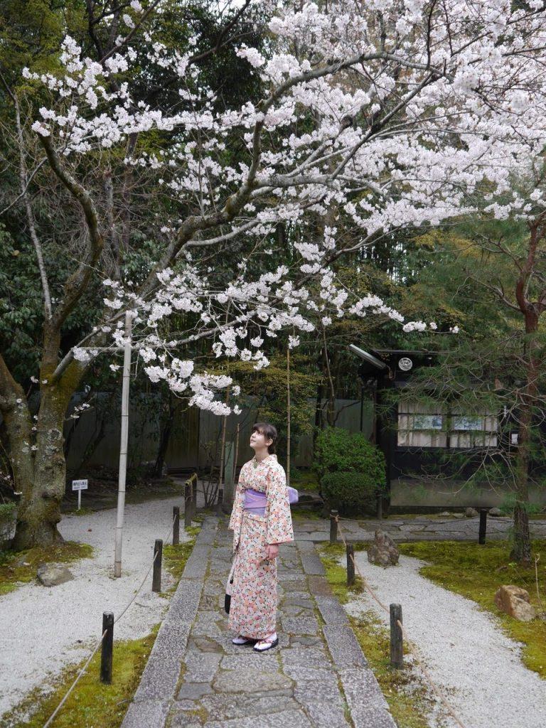 Cherry blossom in Konchi-in, Kyoto