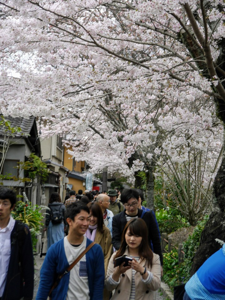 Philosopher Walk, Kyoto