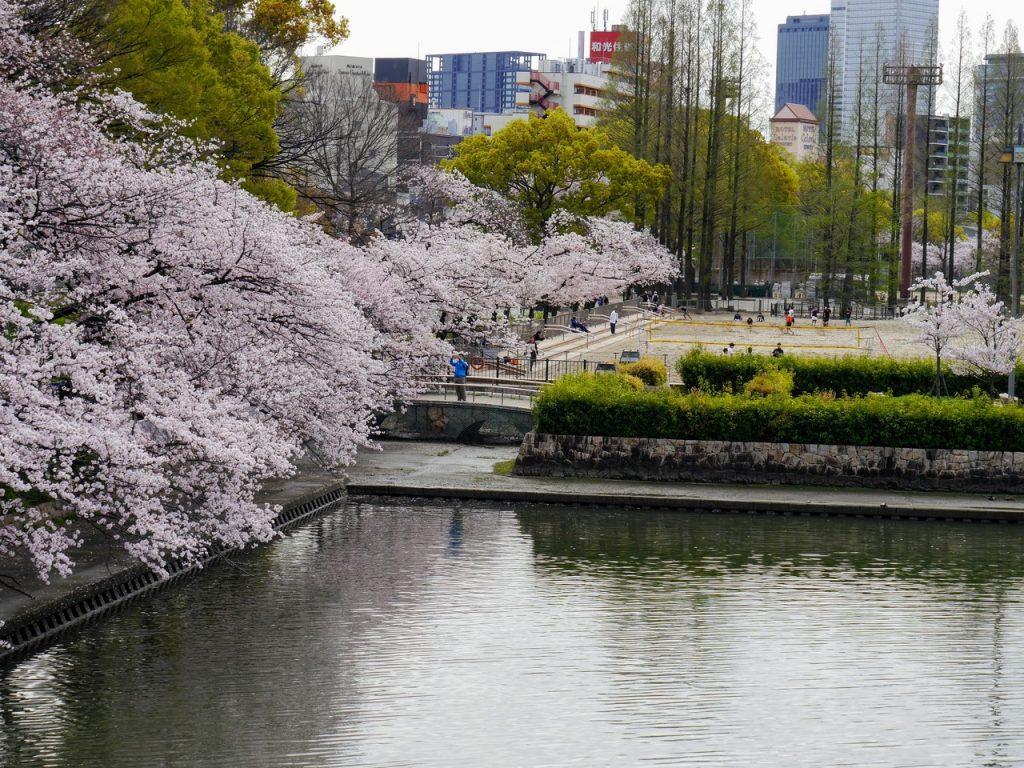 Osaka, sakura blossom