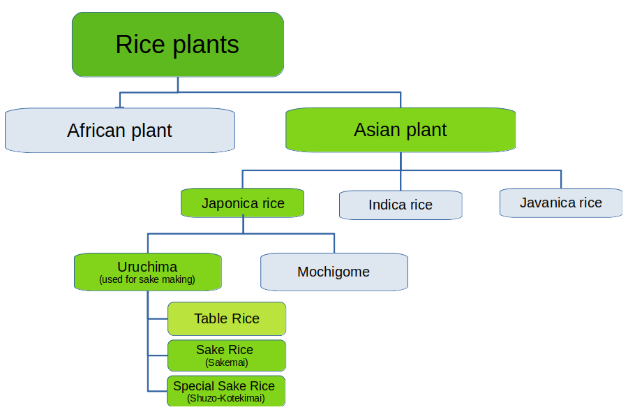 rice classification